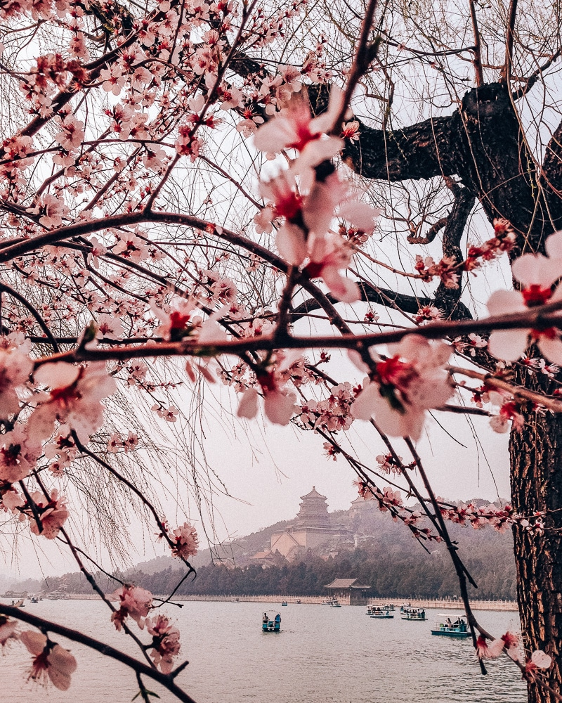 Cherry blossoms at the Summer Palace in Beijing, China. Find out if LivingSocial Escapes and Groupon Getaways are good deals or a scam in our Living Social & Groupon travel reviews.