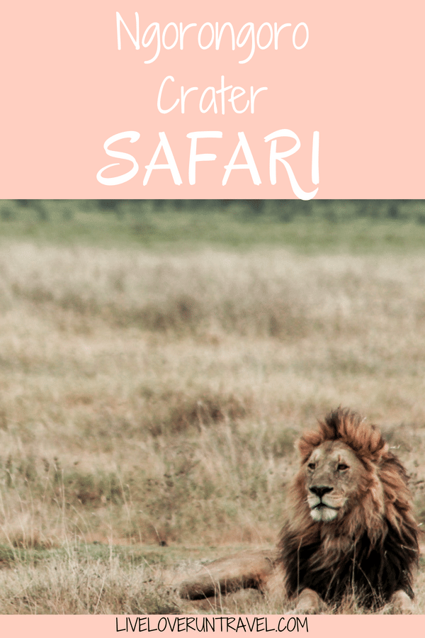If you want to go on an African safari, Ngorongoro Crater in Tanzania should be on your bucket list
