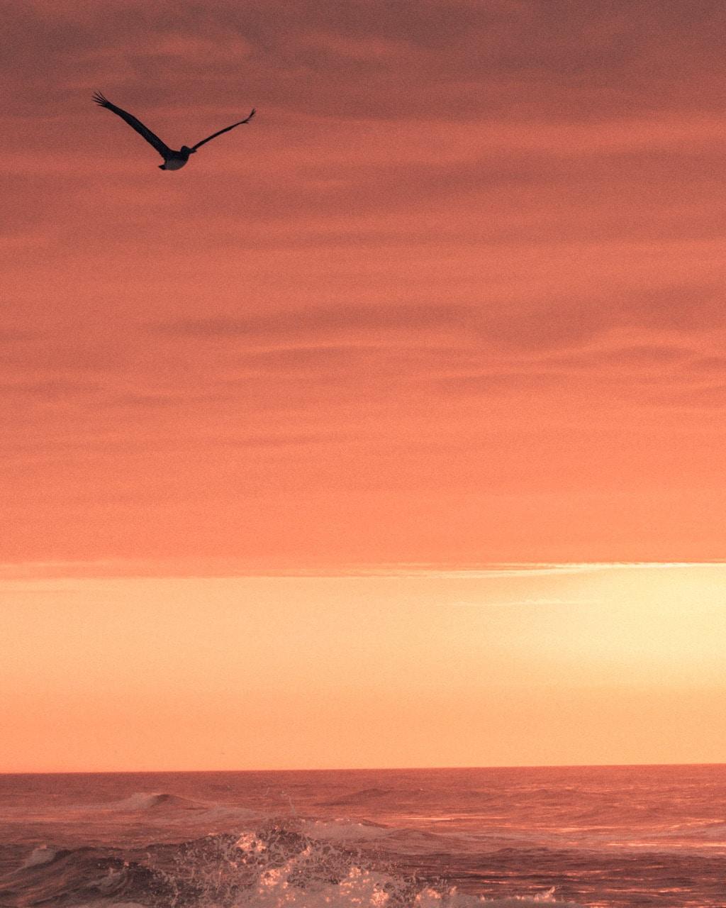 Pensacola beach sunrise with seagull