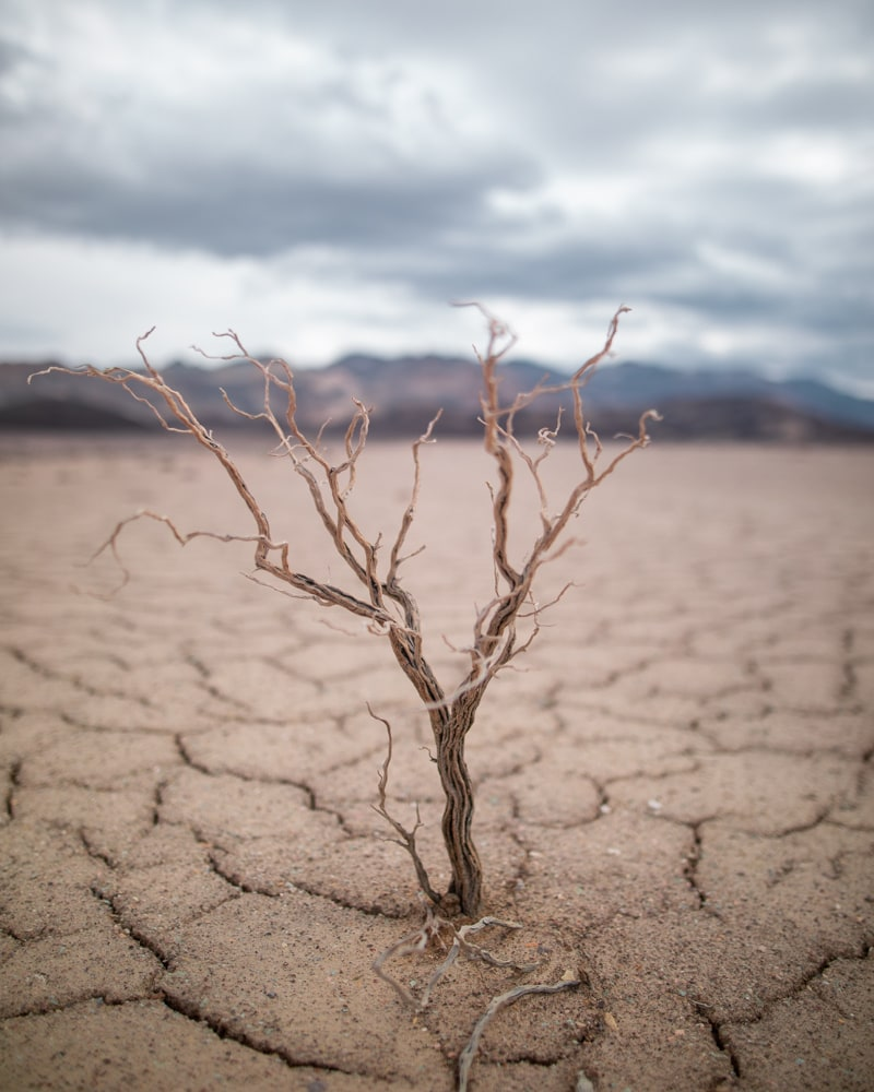 A tree struggles with the harsh conditions of Death Valley National Park but manages to survive. Find a full one day itinerary for Death Valley including where to stay, what to see and do, and when to visit.