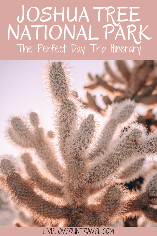 The perfect itinerary for one day in Joshua Tree National Park in California including the best hikes in Joshua Tree and Joshua Tree Instagram photo spots. This guide includes the best things to do in Joshua Tree along with Joshua Tree photography. Joshua Tree California is one of the best national parks in California and one of the best national parks in the United States. Joshua Tree is a must stop on a California road trip, and you can definitely see Joshua Tree in one day.