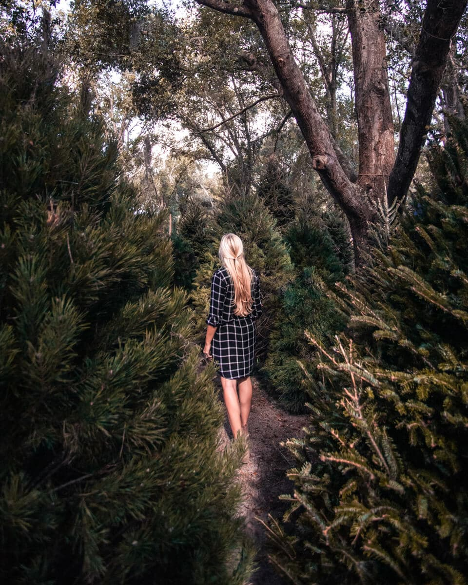 Walking through the paths of Christmas trees at the Christmas tree forest in Orlando, Florida. Santa's Tree Farm is just one of the 40+ things to do at Christmas in Orlando listed here.