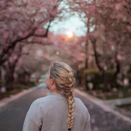 Kenwood Cherry Blossoms Guide: The Famous Bethesda Cherry Blossoms