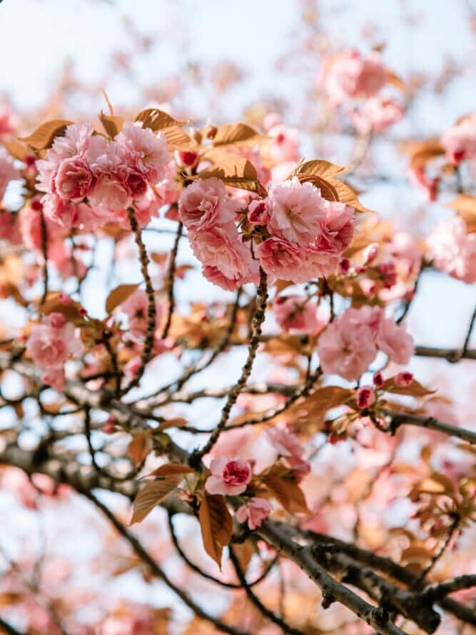 Spring in Washington DC